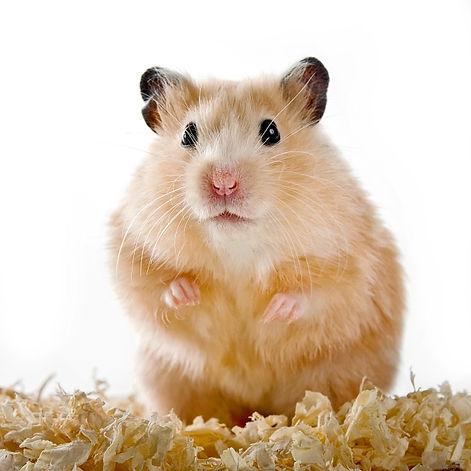 Hamster Tierisch Creativ Neuss Futter.jp