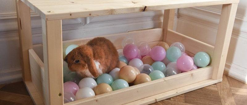 Kaninchen Bällebad