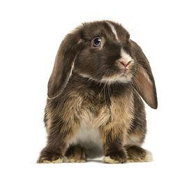 ängstliches Kaninchen Futter zur Entspannung und Angst.jpg