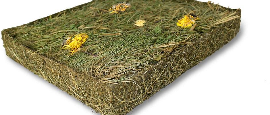 Kräuterwiese mit Blüten
