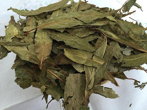 Weidenblätter | Gegen Fieber und Schmerzen, antirheumatisch