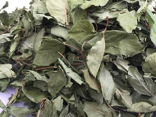 Mirabellenblätter mit kleinen Ästchen