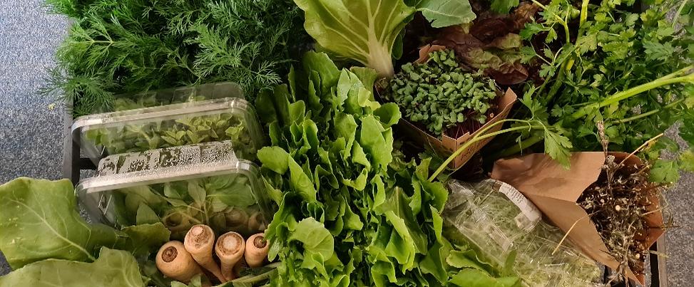 Salat- und Kräuter Frischekiste | L