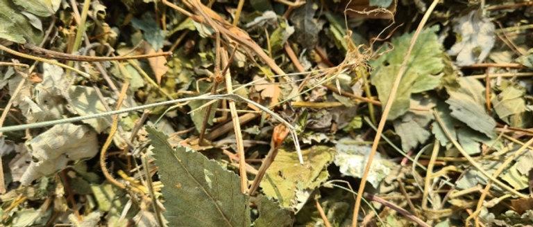 Beerenblätter Mischung