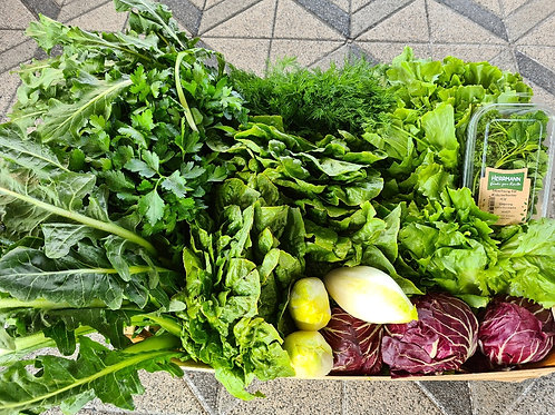 Große Salat- und Kräuterkiste | L