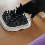 Katzenpension Neuss 2.jpg