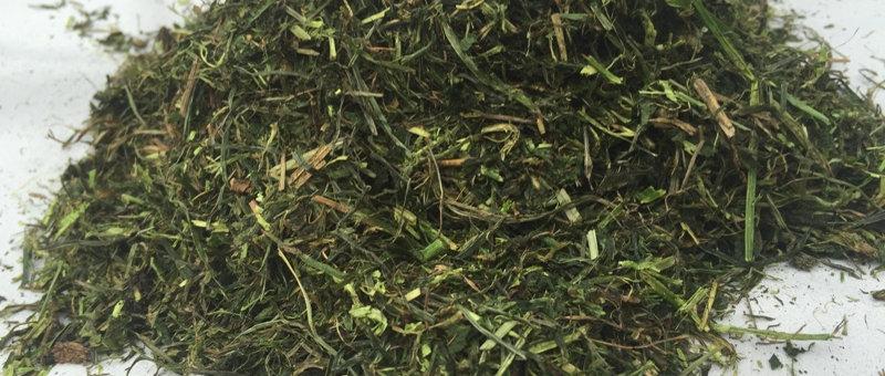 Grüne Wiese | Energiereiches, getrocknetes Wiesengras