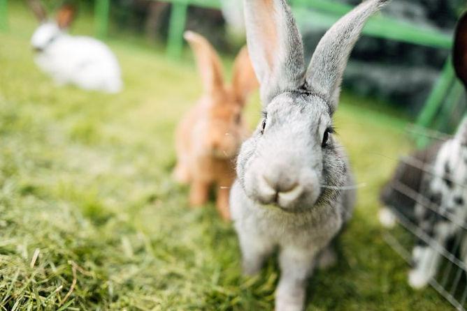Startseite Kaninchen.jpg