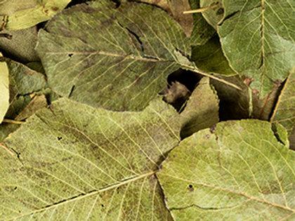 500g Birnenblätter - calciumarm