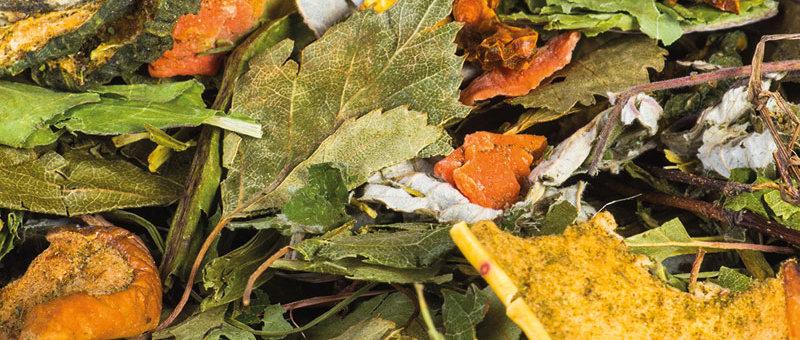 Schmackhafte Gemüsegarten Mischung