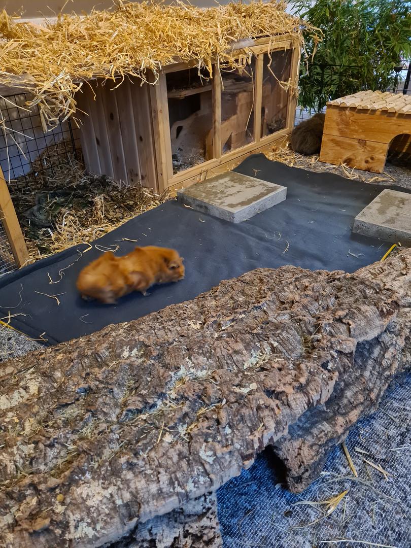 Meerschweinchen Gehege mit Urinteppich