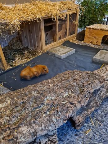 Meerschweinchen Urinteppiche Gehege.jpg