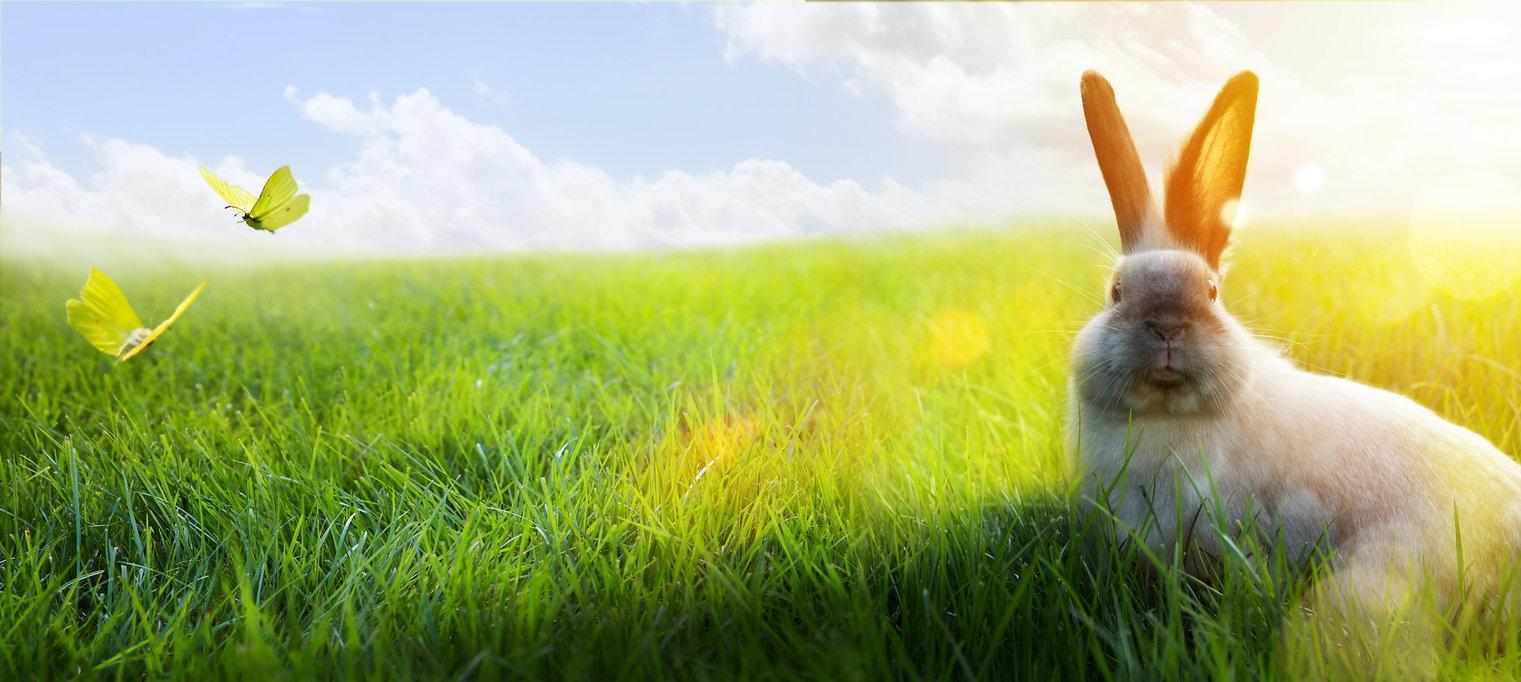 Startseite Tierisch Creativ Kaninchen Me
