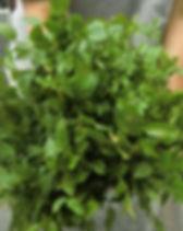 Heidelbeerbusch und Zweige.jpg