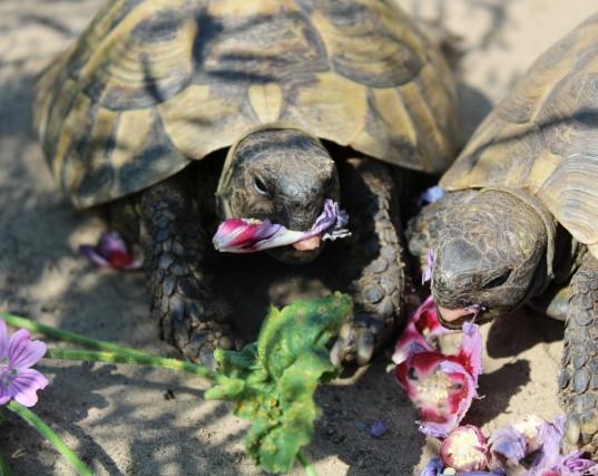 Schildkröten Futter