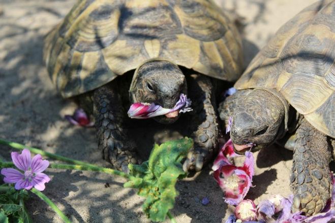 Schildkröten Tierisch Creativ Neuss Nahr