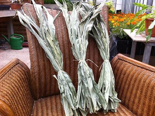 10 getrocknete Maisblätter - calciumarm