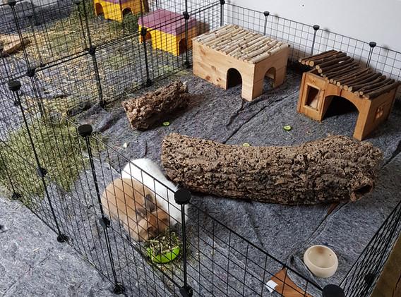 Kaninchen Innengehege