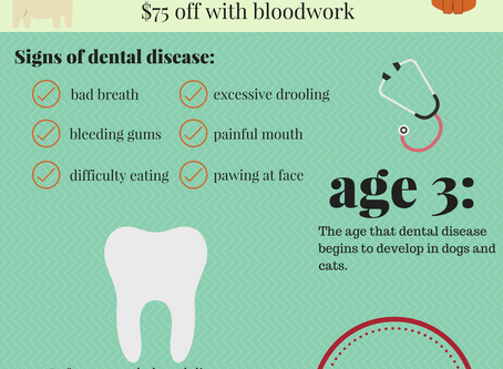 Save $50 on all dental cleanings in October!