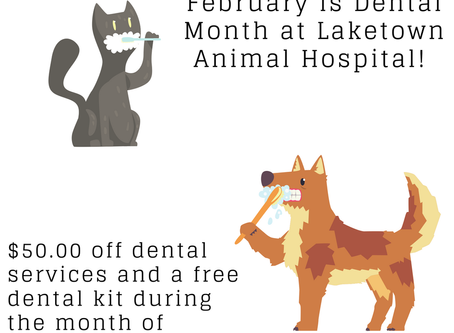 Save $50 on your pet's dental cleaning in February!