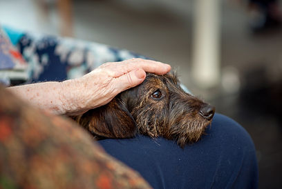 Pet Hospice Care in Springfield