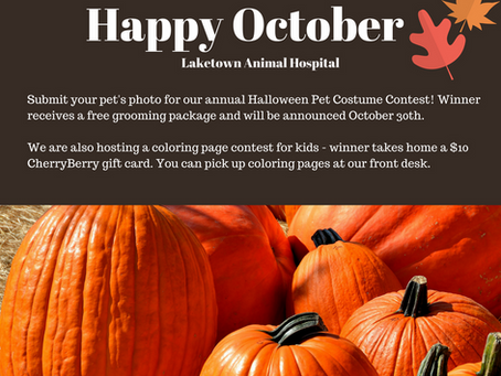 October is here, join us for Halloween fun!