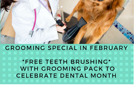Grooming Special February 2018