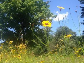 Happy Wildflower Day!