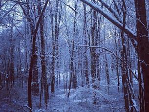 Bare bones and empty branches