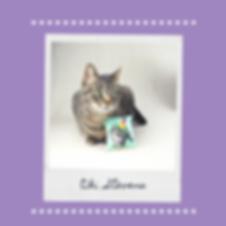 Brown Polaroid Papercraft Love Your Pet