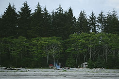 森のキャンパー