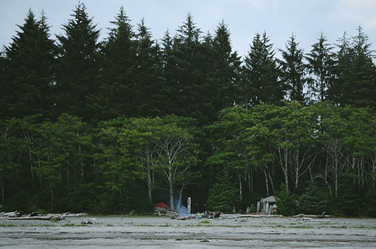 Beaver Forest