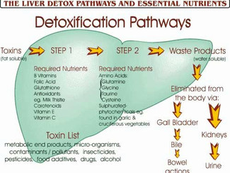 DETOXIFICATION - A  NATUROPATHIC PERSPECTIVE