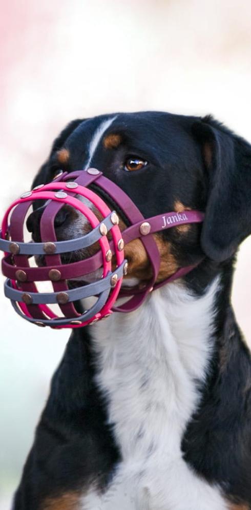 Hund mit Biothanemaulkorb