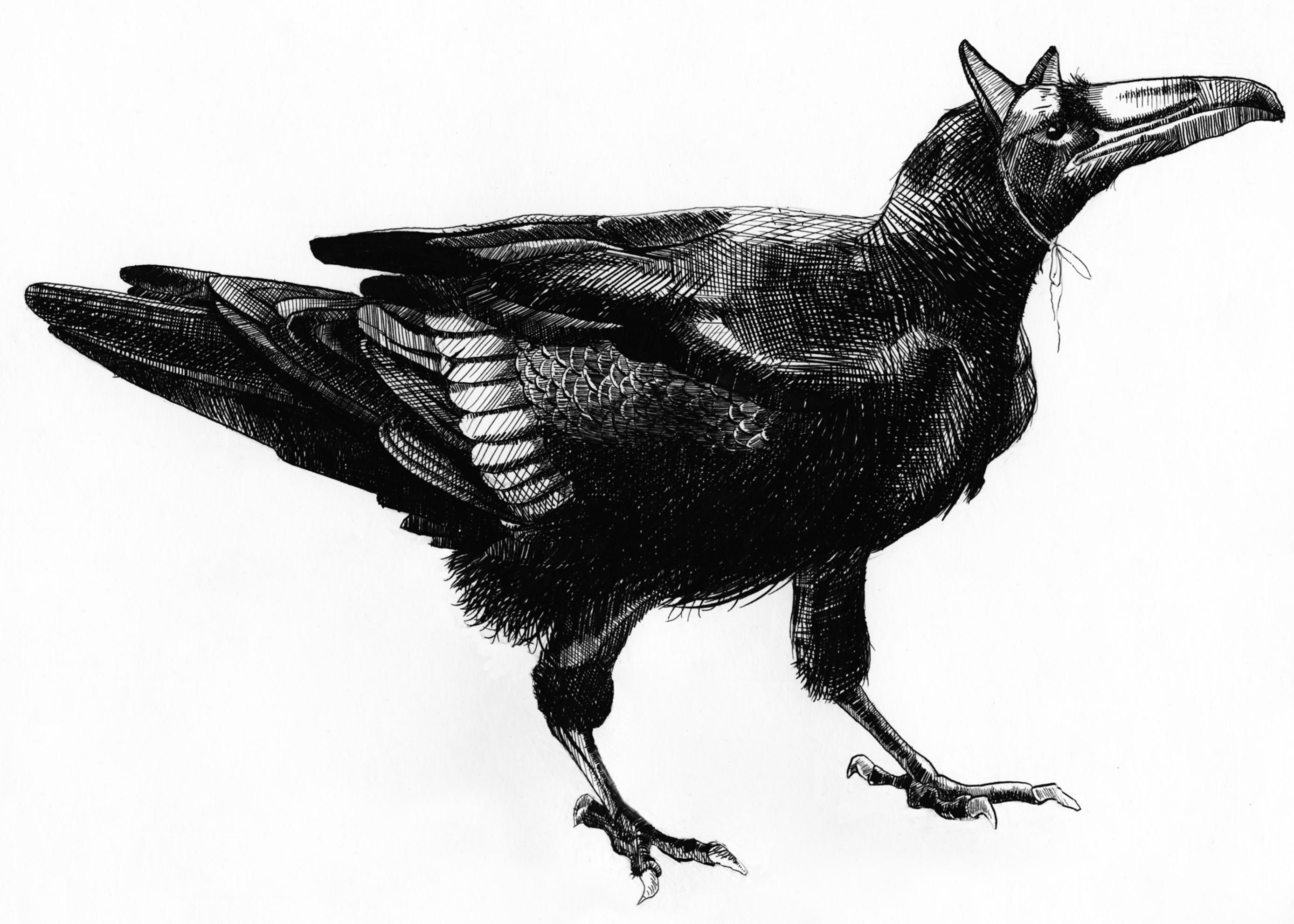 Raven Clean.jpg