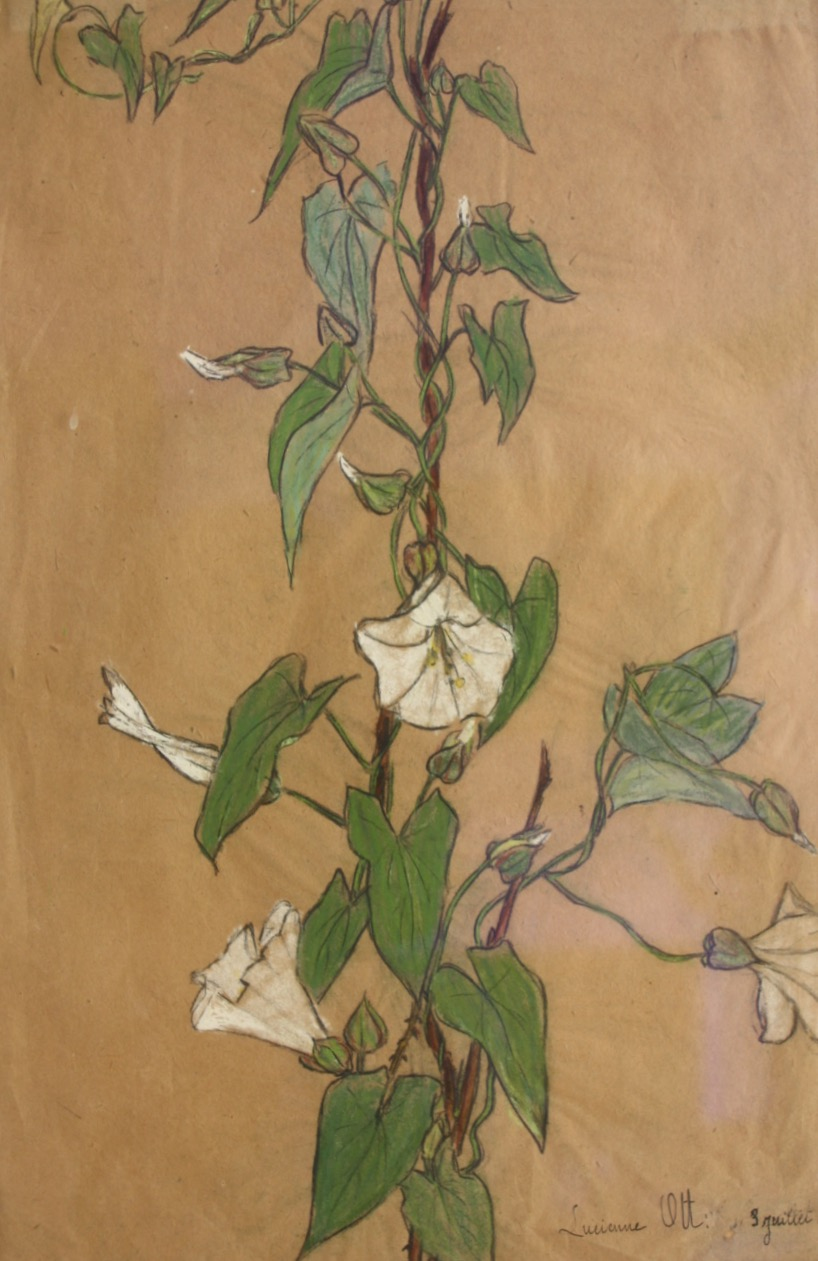 Lucienne Ott, Bindweed