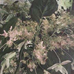 Lucy Cavendish, Hydrangea
