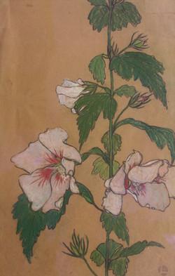 Lucienne Ott, Hibiscus