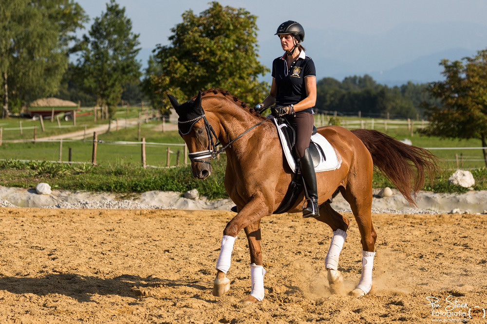 Pferd Dressur