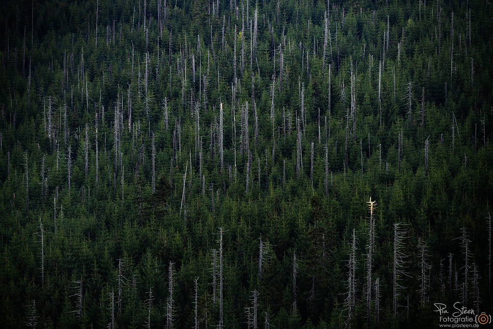Lusen Bayerischer Wald