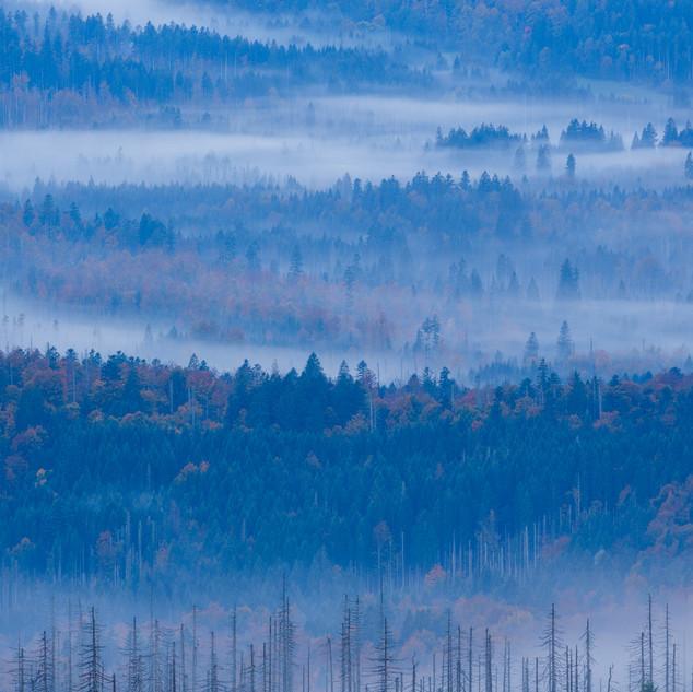 Bayerischer Wald