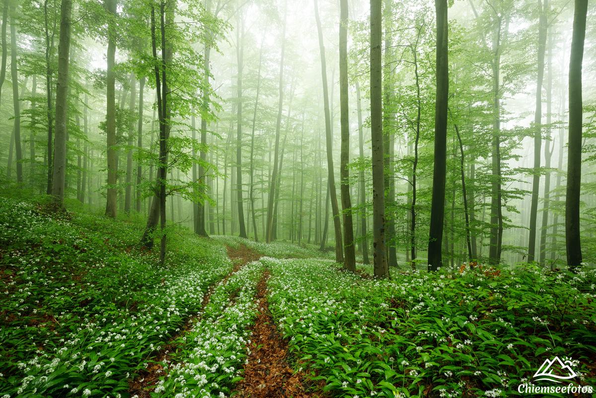 Wald im Chiemgau