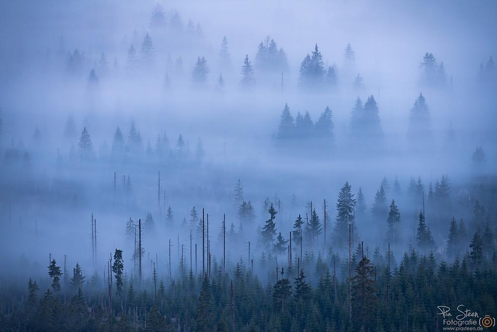 Lusen Bayerischer Nationalpark