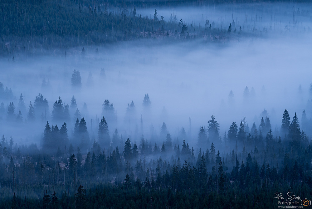 Lusen Nationalpark Bayerischer Wald