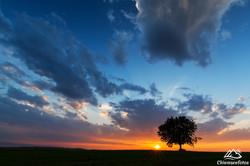 Baum im Chiemgau