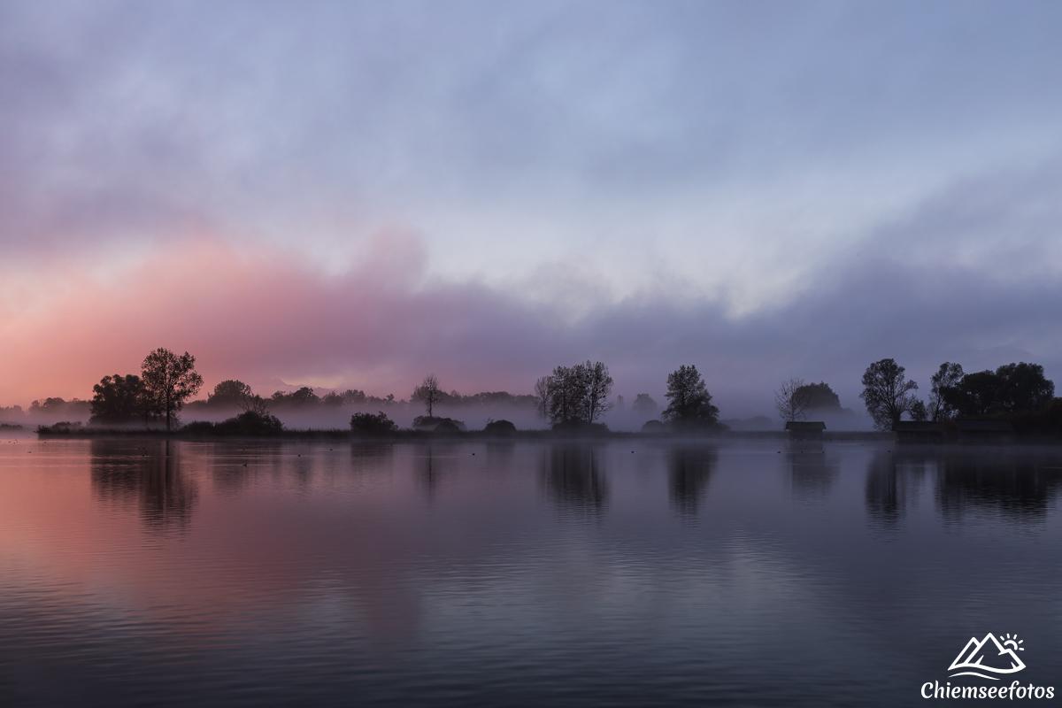 Nebelbäume am Chiemsee
