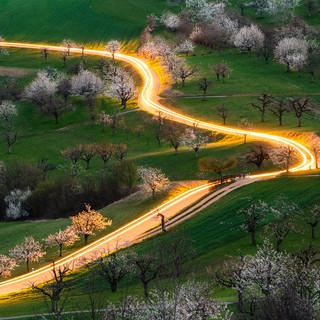 Lighttrails Kirschblüte