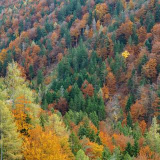 Slowenien Herbst