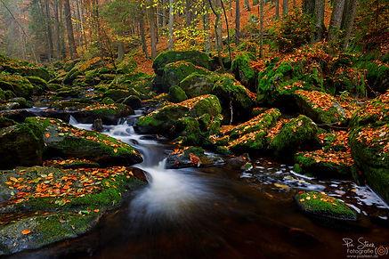 Bach im Bayerischen Wald