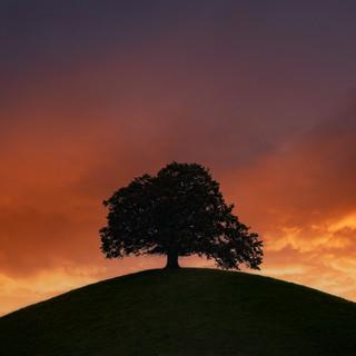 Schweizer Baum